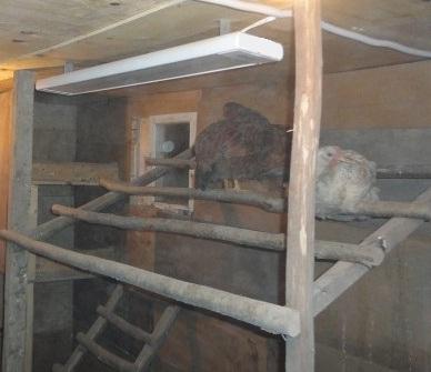 отопление курятника инфракрасными панелями