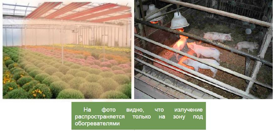 обогрев теплиц и ферм инфракрасными обогревателями